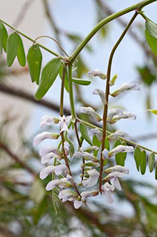 Image http://bioimages.vanderbilt.edu/lq/thomas/w0478-01-07.jpg