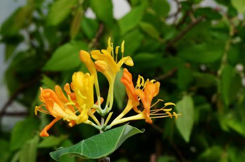 Image http://bioimages.vanderbilt.edu/lq/thomas/w0479-01-03.jpg