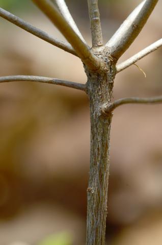 Image http://bioimages.vanderbilt.edu/lq/thomas/w0481-01-07.jpg