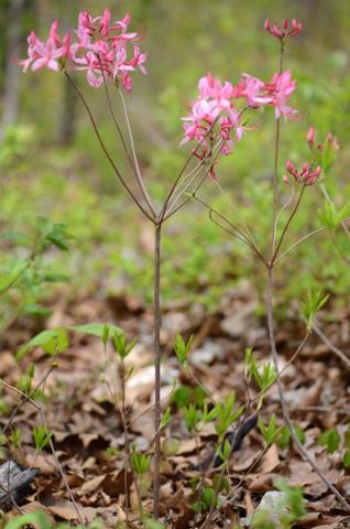 Image http://bioimages.vanderbilt.edu/lq/thomas/w0481-01-10.jpg