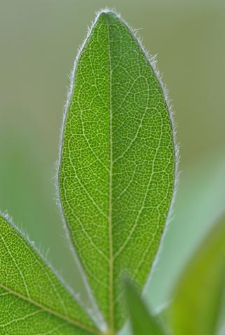 Image http://bioimages.vanderbilt.edu/lq/thomas/w0484-01-03.jpg