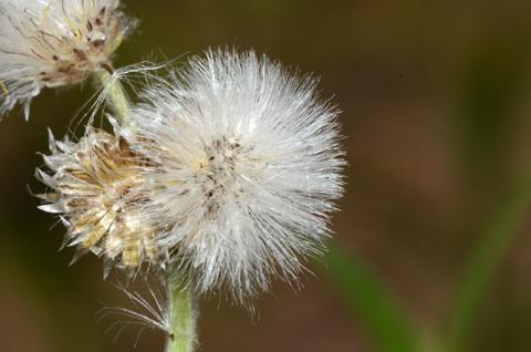 Image http://bioimages.vanderbilt.edu/lq/thomas/w0485-01-03.jpg