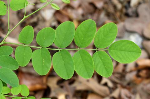 Image http://bioimages.vanderbilt.edu/lq/thomas/w0486-01-04.jpg