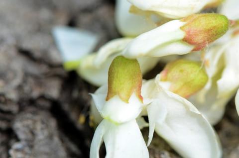 Image http://bioimages.vanderbilt.edu/lq/thomas/w0486-01-10.jpg
