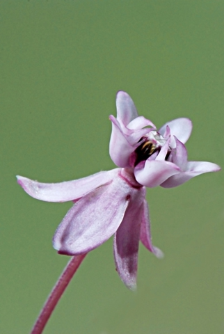 Image http://bioimages.vanderbilt.edu/lq/thomas/w0494-01-05.jpg