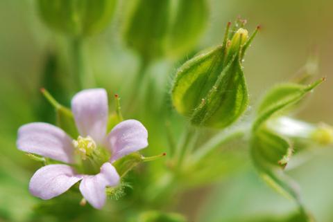 Image http://bioimages.vanderbilt.edu/lq/thomas/w0502-02-05.jpg