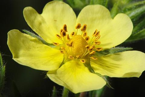 Image http://bioimages.vanderbilt.edu/lq/thomas/w0504-01-02.jpg