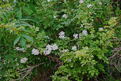 Image http://bioimages.vanderbilt.edu/lq/thomas/w0508-01-01.jpg