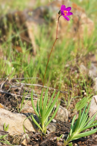 Image http://bioimages.vanderbilt.edu/lq/thomas/w0516-01-05.jpg