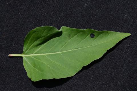 Image http://bioimages.vanderbilt.edu/lq/thomas/w0520-01-02.jpg
