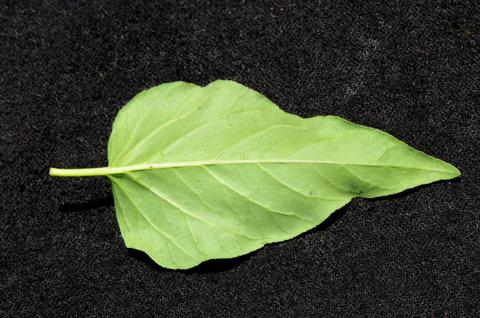 Image http://bioimages.vanderbilt.edu/lq/thomas/w0520-01-03.jpg