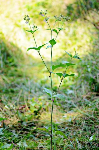 Image http://bioimages.vanderbilt.edu/lq/thomas/w0520-01-04.jpg
