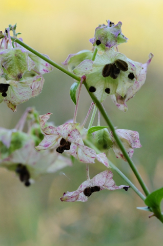 Image http://bioimages.vanderbilt.edu/lq/thomas/w0520-01-06.jpg