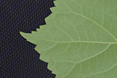 Image http://bioimages.vanderbilt.edu/lq/thomas/w0523-01-07.jpg