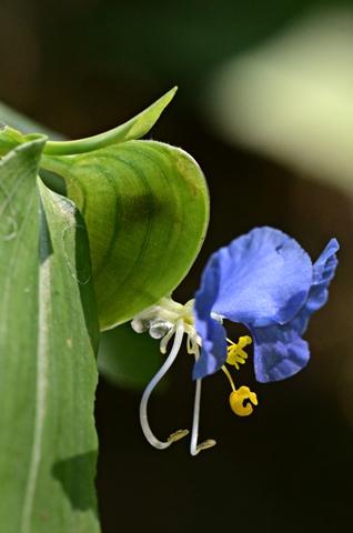 Image http://bioimages.vanderbilt.edu/lq/thomas/w0524-01-04.jpg