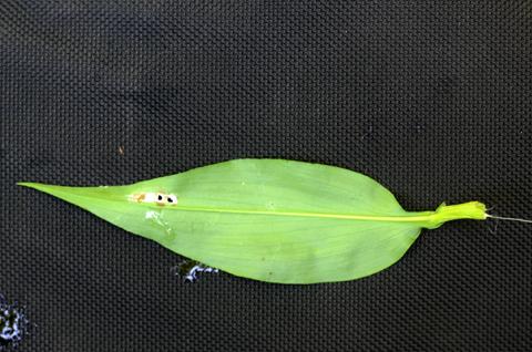 Image http://bioimages.vanderbilt.edu/lq/thomas/w0524-01-07.jpg