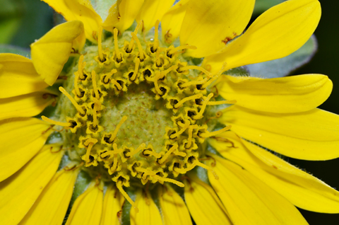 Image http://bioimages.vanderbilt.edu/lq/thomas/w0526-01-07.jpg