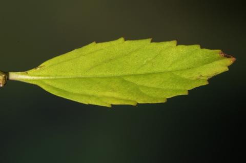 Image http://bioimages.vanderbilt.edu/lq/thomas/w0527-01-08.jpg