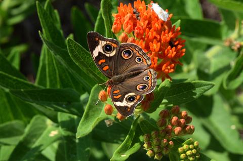 Image http://bioimages.vanderbilt.edu/lq/thomas/w0528-01-03.jpg