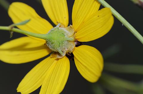 Image http://bioimages.vanderbilt.edu/lq/thomas/w0529-01-06.jpg
