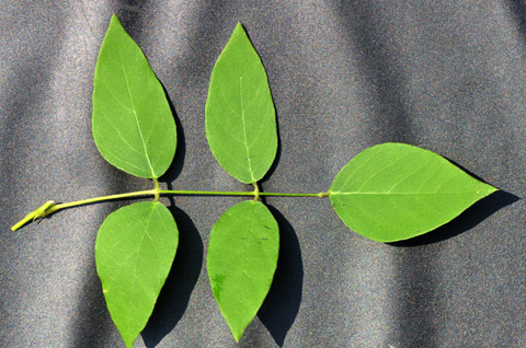 Image http://bioimages.vanderbilt.edu/lq/thomas/w0530-01-07.jpg