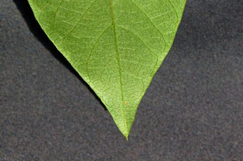 Image http://bioimages.vanderbilt.edu/lq/thomas/w0530-01-09.jpg