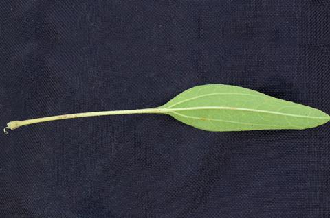 Image http://bioimages.vanderbilt.edu/lq/thomas/w0531-01-09.jpg