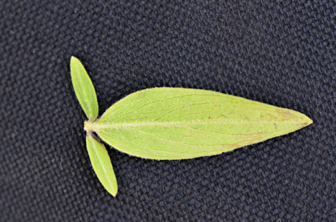 Image http://bioimages.vanderbilt.edu/lq/thomas/w0534-01-07.jpg