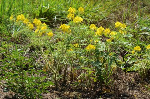 Image http://bioimages.vanderbilt.edu/lq/thomas/w0537-01-13.jpg