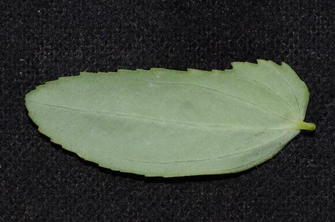 Image http://bioimages.vanderbilt.edu/lq/thomas/w0542-01-06.jpg
