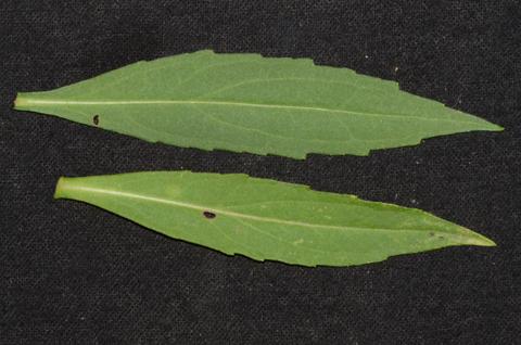 Image http://bioimages.vanderbilt.edu/lq/thomas/w0545-01-02.jpg