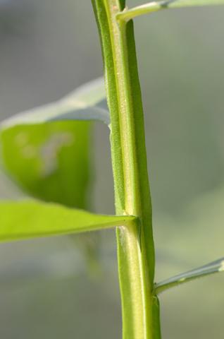 Image http://bioimages.vanderbilt.edu/lq/thomas/w0545-01-06.jpg