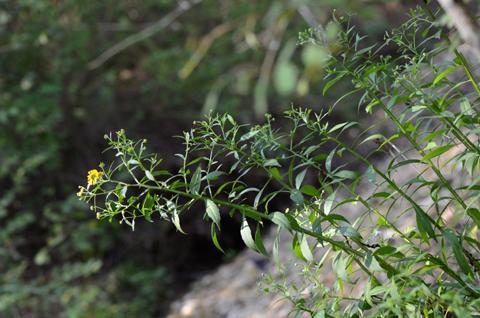 Image http://bioimages.vanderbilt.edu/lq/thomas/w0545-01-08.jpg
