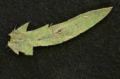 Image http://bioimages.vanderbilt.edu/lq/thomas/w0550-01-11.jpg