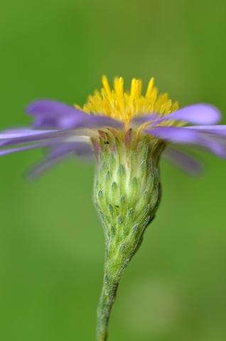 Image http://bioimages.vanderbilt.edu/lq/thomas/w0561-01-03.jpg