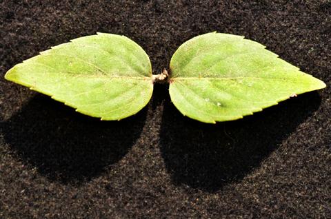 Image http://bioimages.vanderbilt.edu/lq/thomas/w0562-01-07.jpg