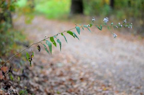 Image http://bioimages.vanderbilt.edu/lq/thomas/w0574-01-01.jpg