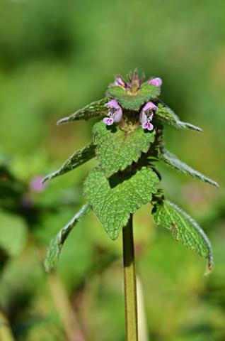Image http://bioimages.vanderbilt.edu/lq/thomas/w0579-01-05.jpg