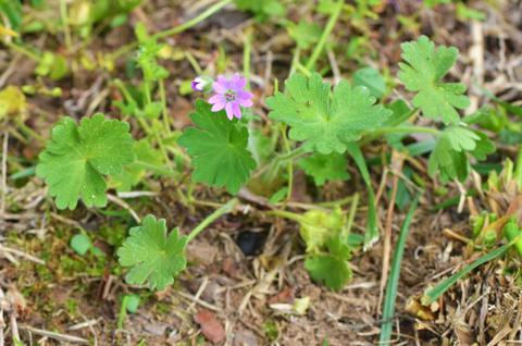 Image http://bioimages.vanderbilt.edu/lq/thomas/w0598-01-02.jpg