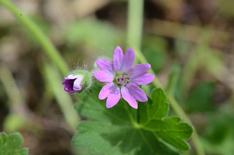 Image http://bioimages.vanderbilt.edu/lq/thomas/w0598-01-07.jpg
