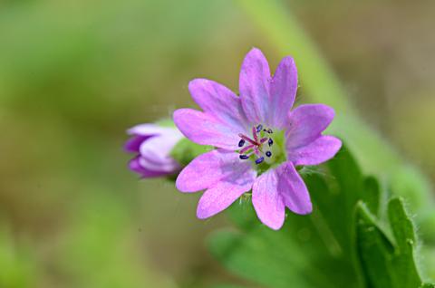Image http://bioimages.vanderbilt.edu/lq/thomas/w0598-01-09.jpg