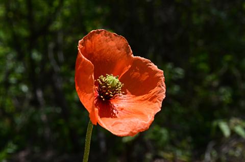 Image http://bioimages.vanderbilt.edu/lq/thomas/w0599-01-04.jpg