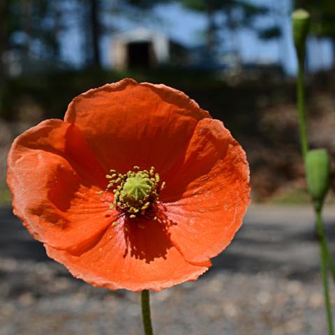 Image http://bioimages.vanderbilt.edu/lq/thomas/w0599-01-11.jpg