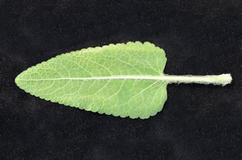 Image http://bioimages.vanderbilt.edu/lq/thomas/w0602-01-12.jpg