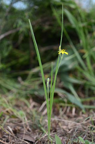 Image http://bioimages.vanderbilt.edu/lq/thomas/w0603-01-01.jpg