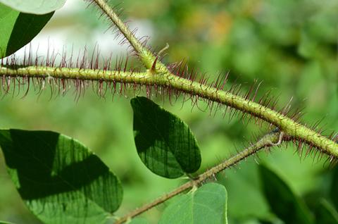 Image http://bioimages.vanderbilt.edu/lq/thomas/w0606-01-05.jpg