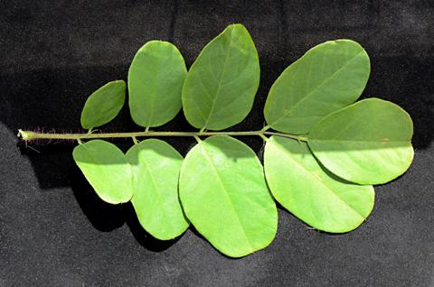 Image http://bioimages.vanderbilt.edu/lq/thomas/w0606-01-10.jpg