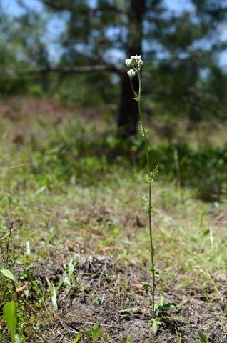 Image http://bioimages.vanderbilt.edu/lq/thomas/w0611-01-01.jpg
