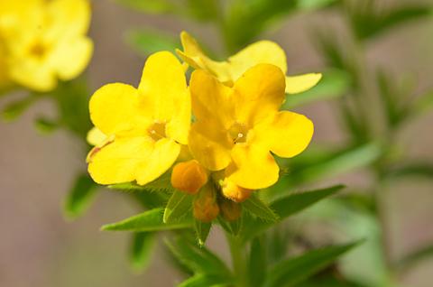 Image http://bioimages.vanderbilt.edu/lq/thomas/w0612-01-03.jpg