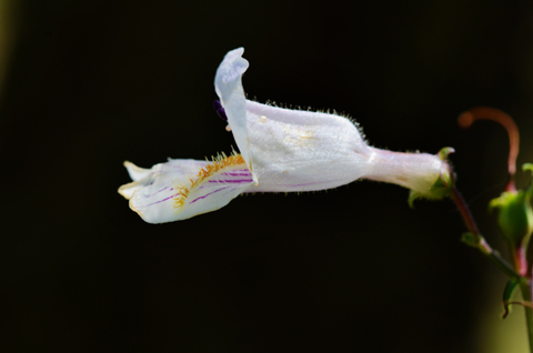 Image http://bioimages.vanderbilt.edu/lq/thomas/w0614-01-01.jpg